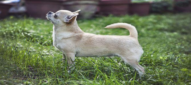 Slovacchi scoperti a vendere cani in centro a Milano