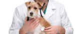 La tutela dei nostri animali passa dal nostro veterinario
