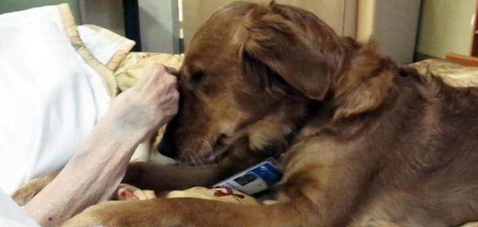 Cani in corsia, Pet Therapy per i malati di SLA