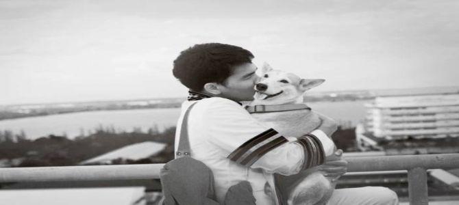 Sei un cane randagio? E io ti abbraccio