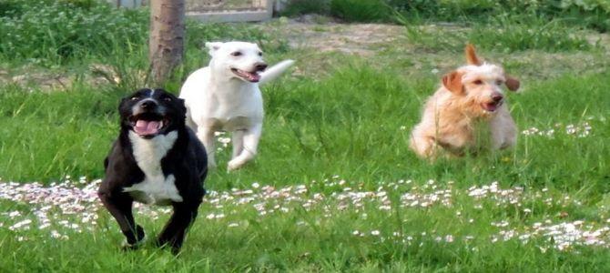 Apericena in favore dei cani più bisognosi