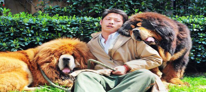 In Cina, permesso solo un cane per famiglia