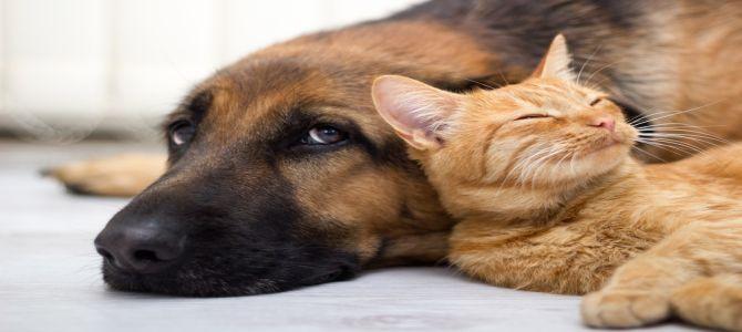 Il cane e il gatto possono essere amici?
