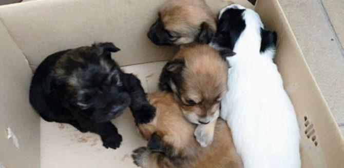 Caltagirone, denunciato assessore alla cultura per aver abbandonato cuccioli per strada