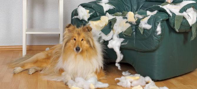 L'iperattaccamento del cane