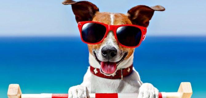 Cane in spiaggia, piccole e semplici regole per una vacanza rilassante e in sicurezza.