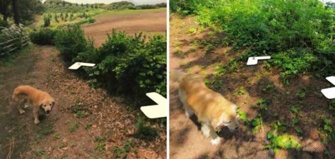 Cane curioso si fa fotografare nelle streetview di tutto un paese.
