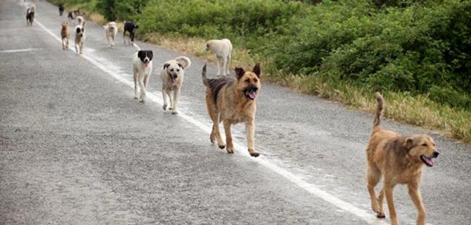 """Incidente auto """"provocato"""" da un cane randagio, a chi compete la responsabilità?"""