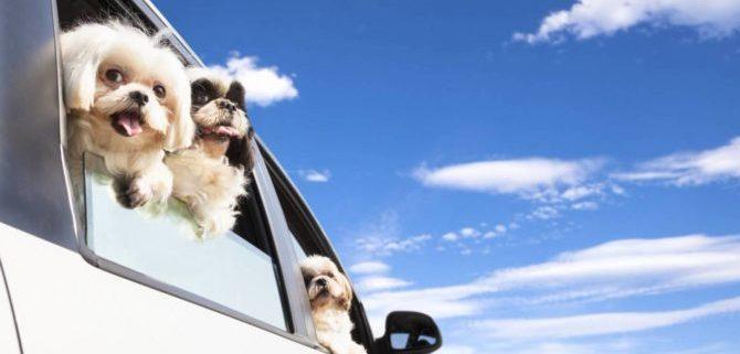 In vacanza con il cane, consigli utili per un soggiorno rilassante.