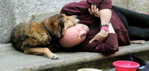 L'uso di cani per elemosinare, in Friuli Venezia Giulia, è reato.