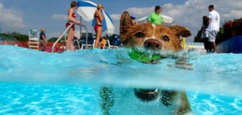Ditellandia, il Dog Water Park: un acquapark con piscina riservata ai cani.
