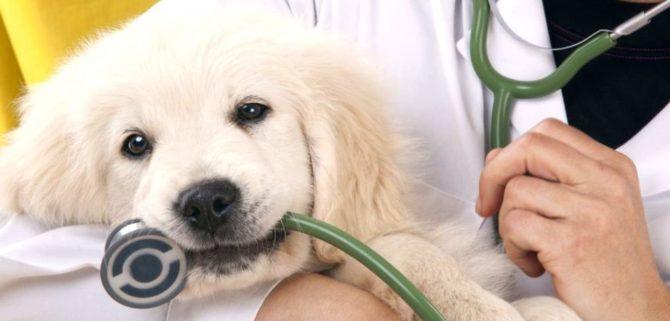 Le alterazioni dell'emostasi nel cane