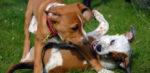 La dissocializzazione nel cane
