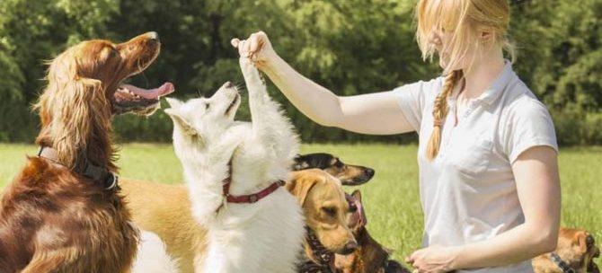 Pet sitter a portata di click
