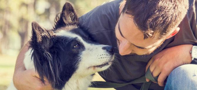 Proverbi da cani, alcuni modi di dire legati al cane