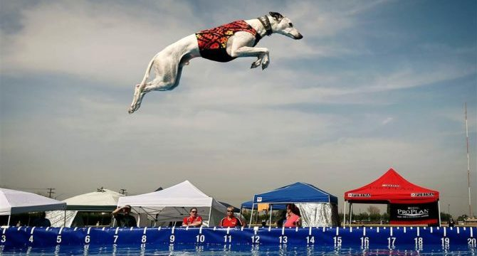Che Sport puoi far fare al tuo cane: Dock Diving