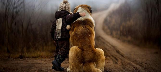 Cani e uomini, amici per geni