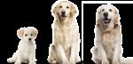 Lo sviluppo de cane, cosa fare e quando: età adulta e oltre.