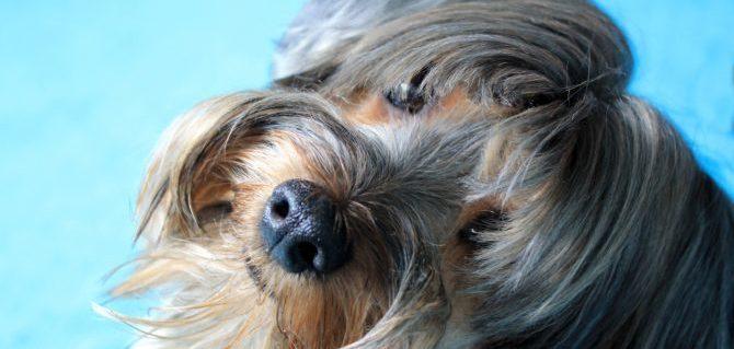 Il cane e la sua identità.