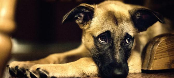 Spina Bifida nel cane: cos'è e come si riconosce