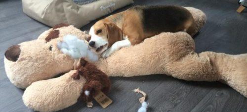 La terapia dell'ansia da separazione nel cane