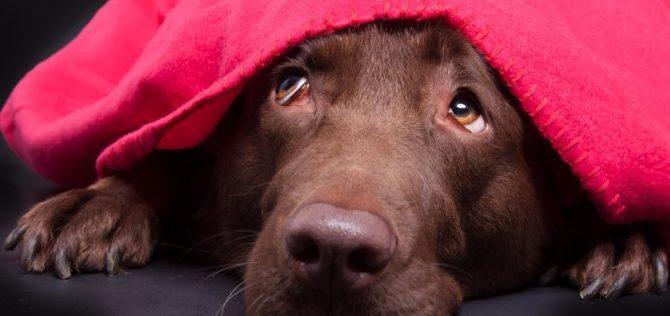 Le terapie comportamentali –  la terapia della desensibilizzazione nel cane