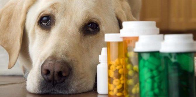 Farmaci veterinari: curare i nostri cani è sempre più un lusso