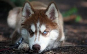 660 eruo di multa per aver ricevuto in regalo un cane