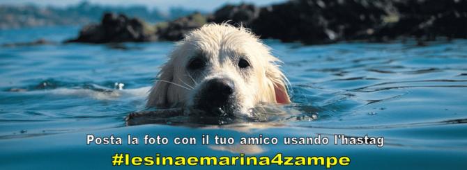 In Puglia fido è l'ospite d'onore all'Animal friendly day