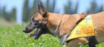 Sniffer Dog, cacciatori di veleno a 4 zampe