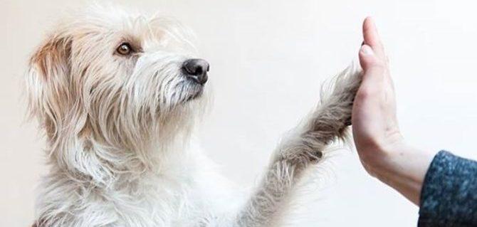 Prendere in affido un cane, buoni motivi per non farlo.