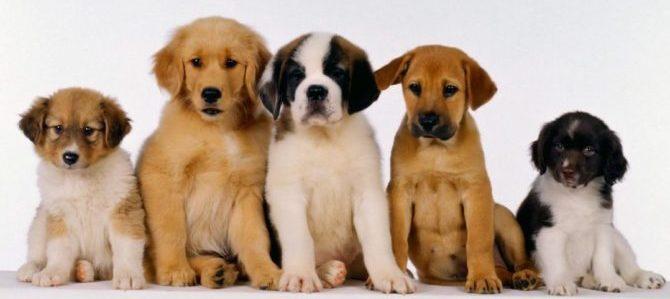 Aiutiamo le adozioni partecipando al Festival Pet's