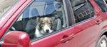 Lascia il cane in auto sotto il sole, rischia linciaggio e scatta la denuncia