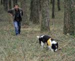 Cani antiveleno impegnati nella bonifica del territorio dai bocconi avvelenati
