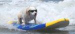 Surf City Surf Dog la competizione per cani che fanno Surf