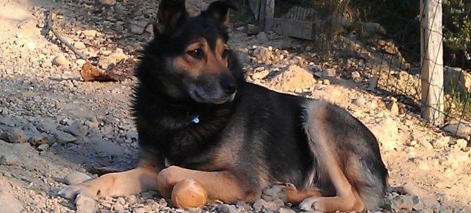 La comunicazione del cane: i comportamenti di controllo