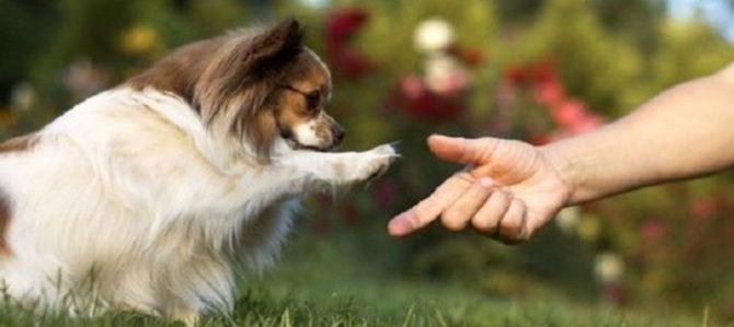 A me gli occhi please. Il cane e le sue richieste di attenzione.