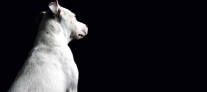 Shunt Portosistemico nel cane: cos'è, i sintomi e come si cura