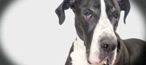 Insufficienza Renale Cronica nel cane: cos'è, quali i sintomi e come si cura