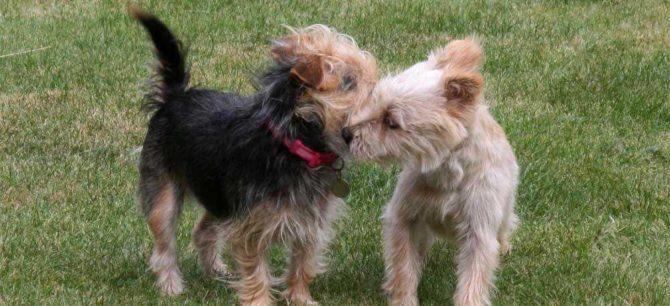 I feromoni del cane come terapia comportamentale