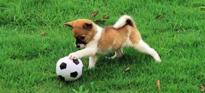 Il valore del gioco per il cane