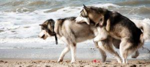 """I comportamenti del cane: vere e proprie """"conversazioni"""" per comunicare intenzioni ed emozioni."""