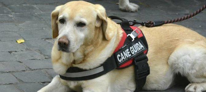 Giornata Nazionale del Cane Guida, un evento per sensibilizzare