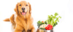 Cani vegani, fa bene o fa male?