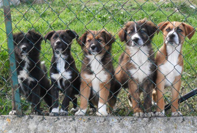 Vive in casa con 20 cani, multata deve scendere a 10