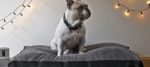 Pet Design, il design di lusso per Fido e i suoi padroni