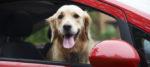 Il Taxi Pet, il servizio di trasporto perfetto per Fido