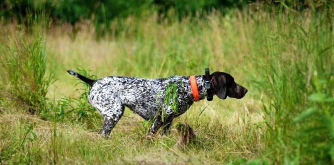 Il comportamento del cane, posture e azioni che valgono più di mille parole.