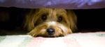 Il cane e le sue paure: i rumori.