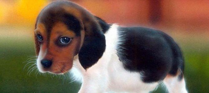 Coccidiosi del cane: che cos'è e come si riconosce